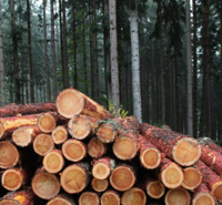 Take Action: Help Stop Illegal Logging -- Read more.